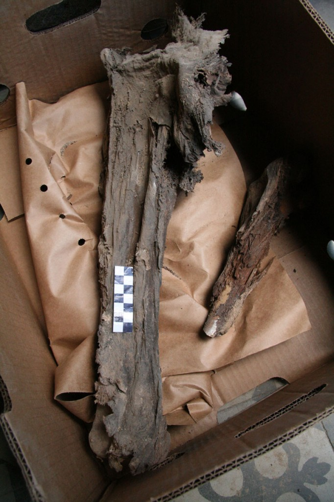 05 Mumifikované stehno (foto MH)